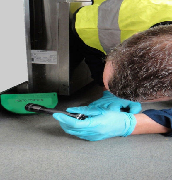 Specialist pest control company in london