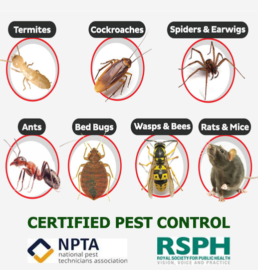 certified pest control in london