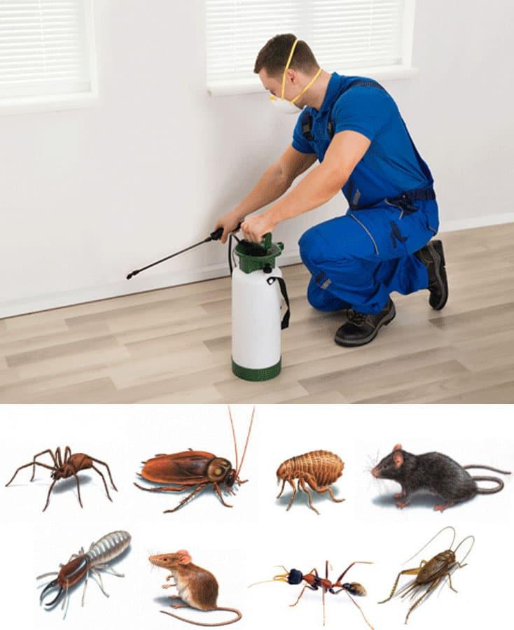 Pest Control in London - 24 Hour Pest Control Services - Ecoserve